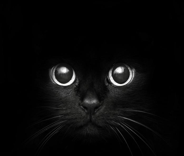 dark-pictures