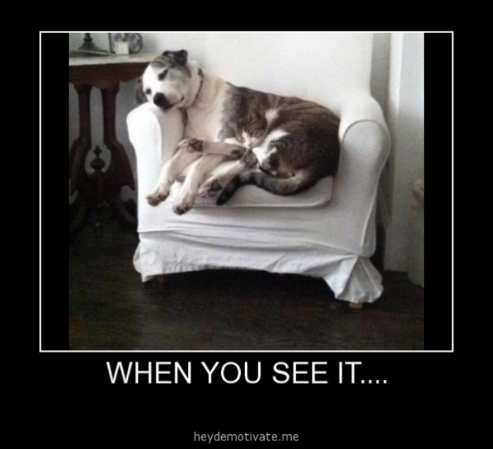 When-you-see-it---Dog and Cat