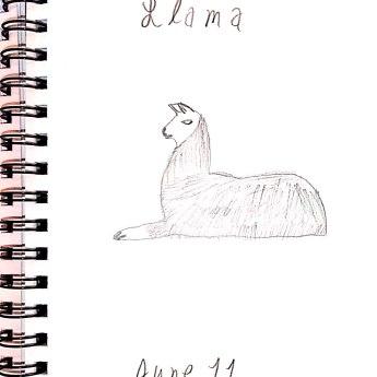 June 11 Llama