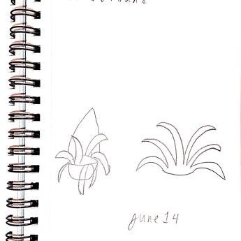 June 14 Flora & Fauna