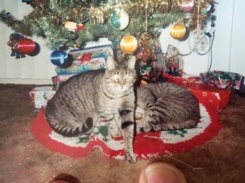 Sponge and Sparkle under Christmas Tree